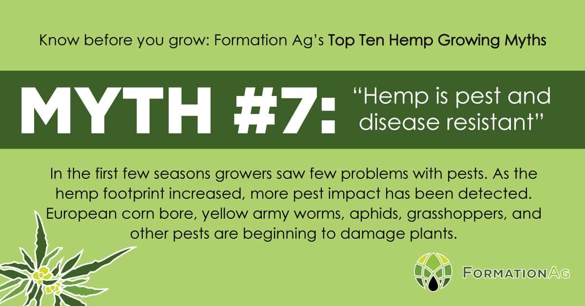 "Myth #7: ""Hemp is pest and disease resistant"""